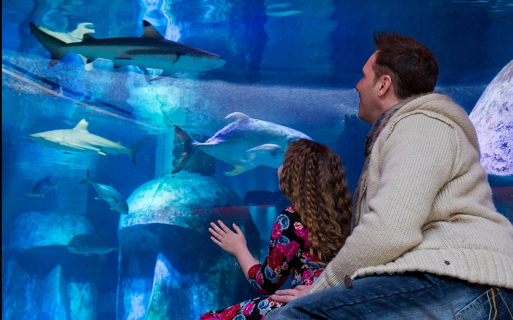 London Aquarium Tickets - A man and child look at sharks in the aquarium