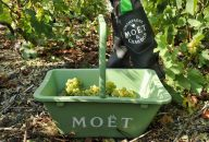 Day Trip to Champagne Region from Paris including Moët & Chandon, Hautvillers and a Family Winery